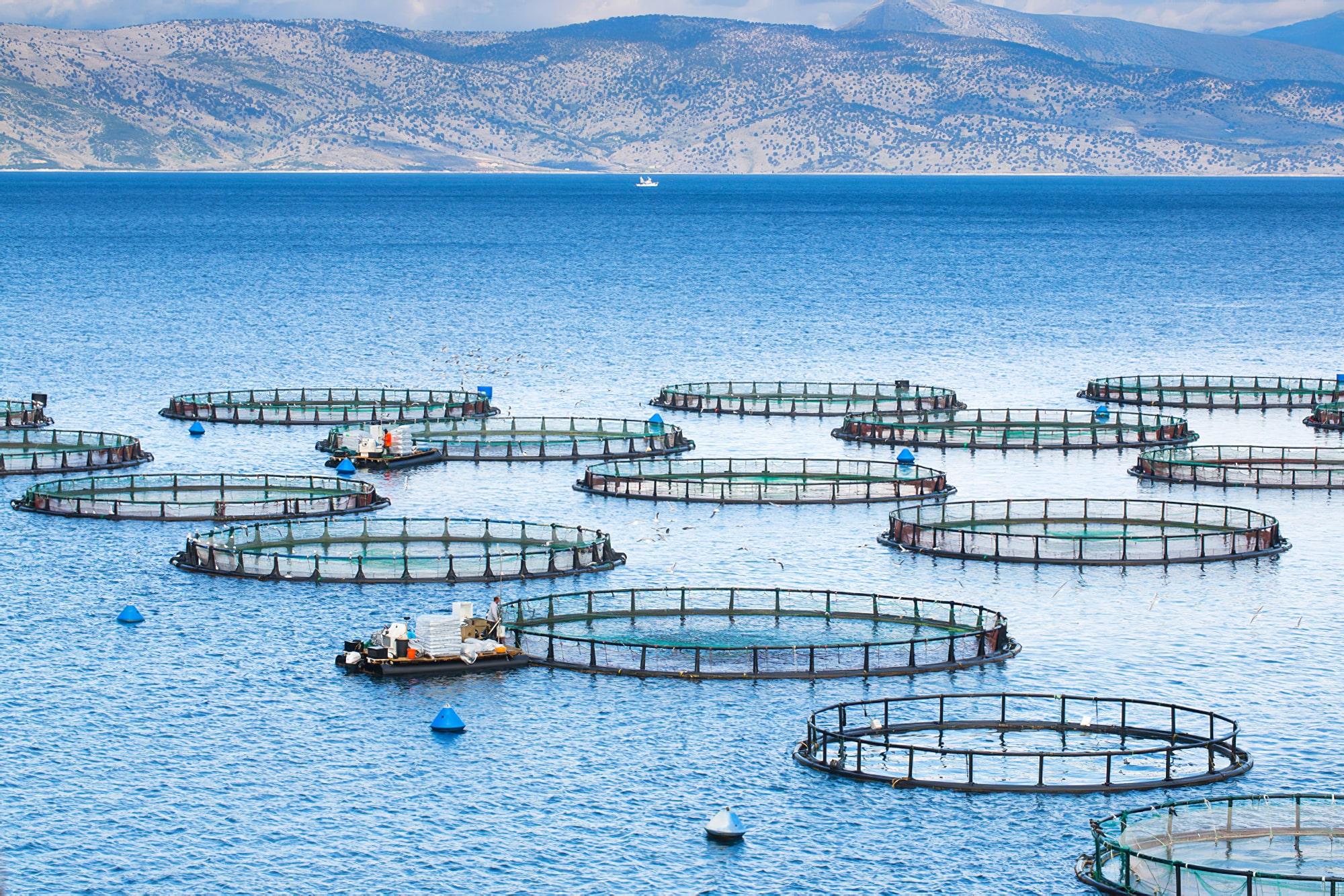 Balık Çiftlikleri Analizi
